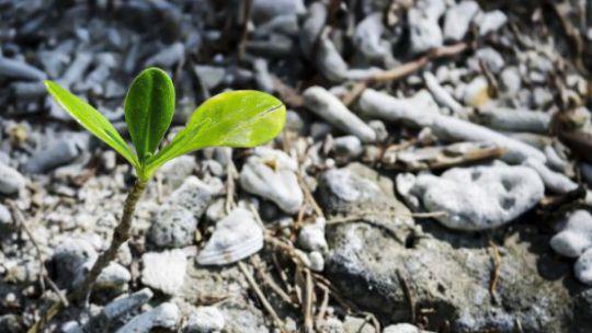 Grünes wächst auf zerklüftetem Boden